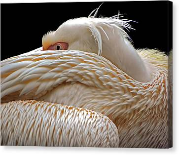 Hidden Canvas Print - To Be Half Asleep... by Thierry Dufour
