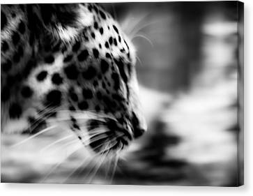 Budi Kwan Canvas Print - Too Close by Mark Hazelton