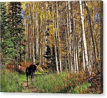 To Hike With A Moose Canvas Print by Gene Praag