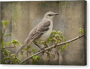 To Still A Mockingbird Canvas Print by Kathy Clark