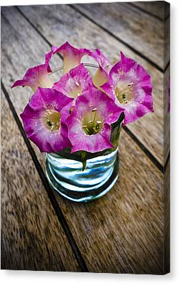 Tobacco Flowers Canvas Print by Frank Tschakert