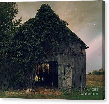 Tobacco Nights Canvas Print by Terri Wilson