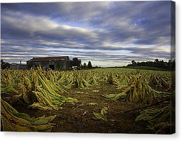 Tobacco Road I Canvas Print