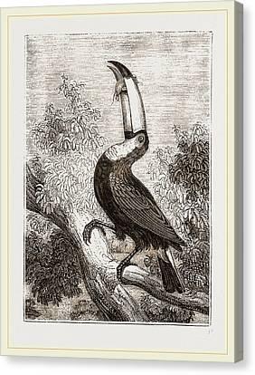 Toco Toucan Canvas Print by Litz Collection