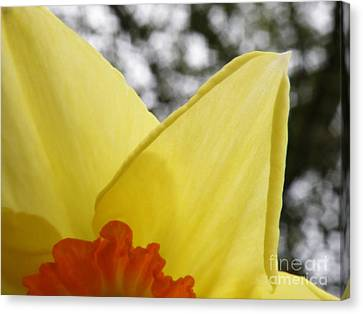 Today Canvas Print by Lainie Wrightson