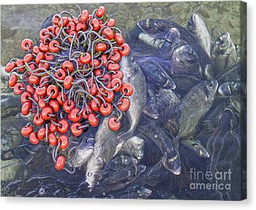 Today's Harvest Canvas Print by Stelios Kleanthous