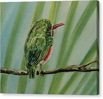 Seem Canvas Print - Tody Bird On A Branch by Richard Goohs