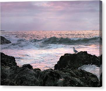 Canvas Print featuring the photograph Tofino Sunset by Micki Findlay