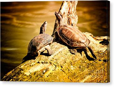 Together We Canvas Print by Venura Herath