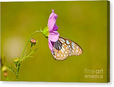 Togetherness Canvas Print by Fotosas Photography