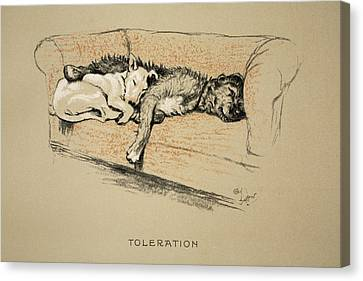 Toleration, 1930, 1st Edition Canvas Print by Cecil Charles Windsor Aldin