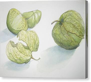 Tomatillos Canvas Print by Maria Hunt