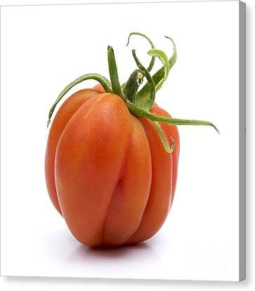 Tomato Canvas Print by Bernard Jaubert
