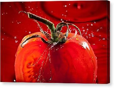 Tomato Freshsplash 2 Canvas Print