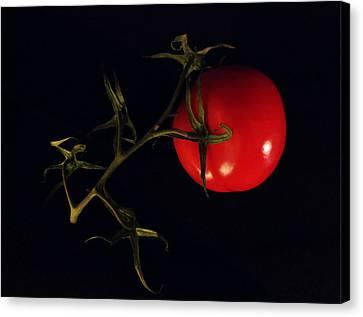 Tomato With Stem Canvas Print by Patricia Januszkiewicz