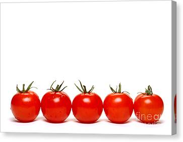 Tomatoes Canvas Print by Olivier Le Queinec
