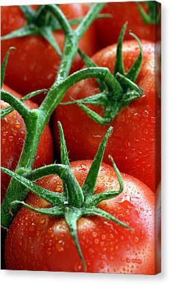 Tomatoes Canvas Print by Ron Sumners