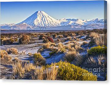 Tongariro National Park New Zealand Canvas Print by Colin and Linda McKie