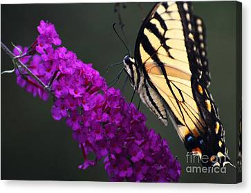 Canvas Print featuring the photograph Too Close For Comfort by Judy Wolinsky