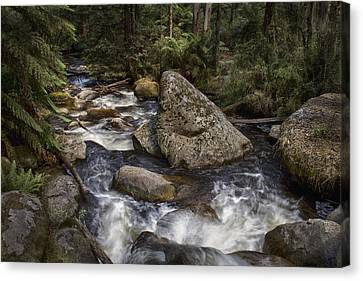 Canvas Print featuring the photograph Tooronga River by Kim Andelkovic