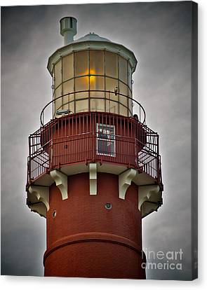 Top Of Barney 2007 - Hawk's Perch Canvas Print by Mark Miller
