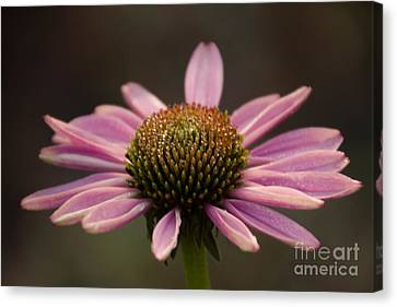 Top Side Canvas Print