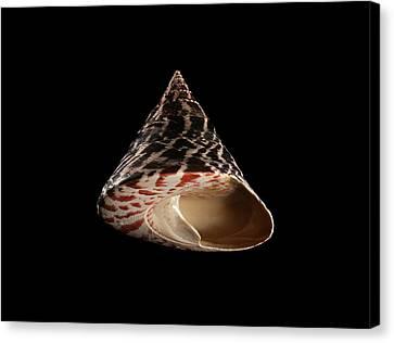 Black Top Canvas Print - Top Snail Shell by Gilles Mermet