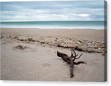 Topsail Island Driftwood Canvas Print by Shane Holsclaw