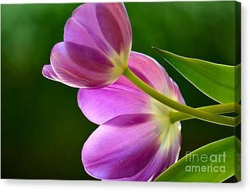 Topsy-turvy Tulips Canvas Print