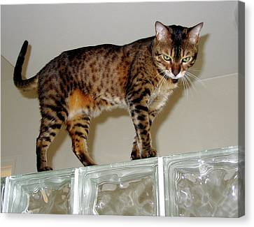 Canvas Print featuring the photograph Tora On Glass II by Phyllis Kaltenbach