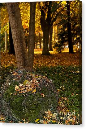 Torch Of Autumn Canvas Print by Lee Craig