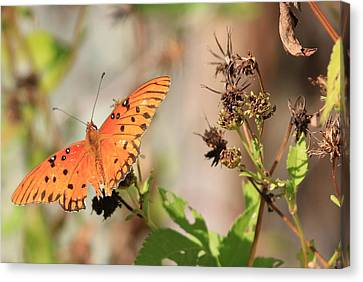 Torn Wing And Dry Flowers Canvas Print by Cyril Maza