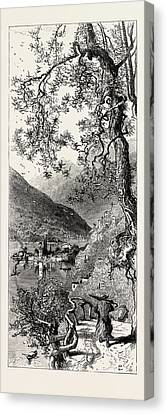 Torno, Lago Di Como, Lario, The Italian Lakes Canvas Print by Italian School