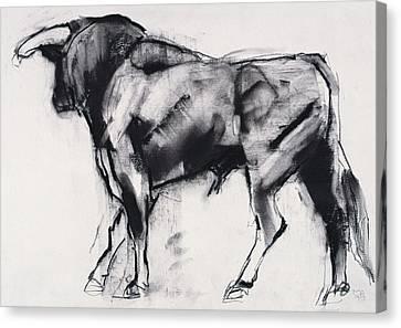 Bovine Canvas Print - Toro Azul   Study by Mark Adlington
