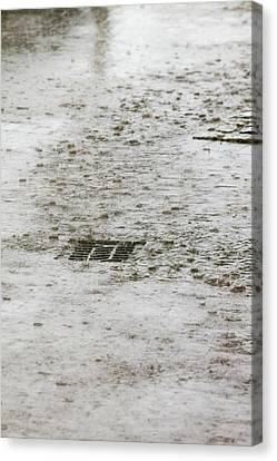 Drain Canvas Print - Torrential Rain by Ashley Cooper