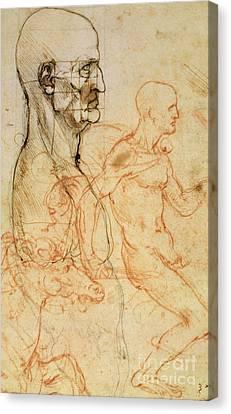 Torso Of A Man In Profile Canvas Print by Leonardo da Vinci