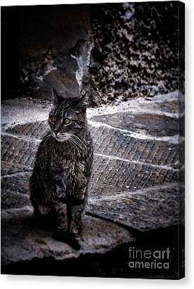 Tortishell Cat Canvas Print