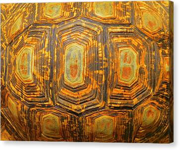 Tortoise Abstract Canvas Print