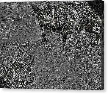 Tortuga Duel Canvas Print by Robert Rhoads