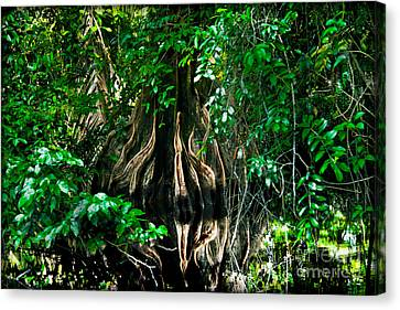 Tortuguero River Canvas Print by Gary Keesler