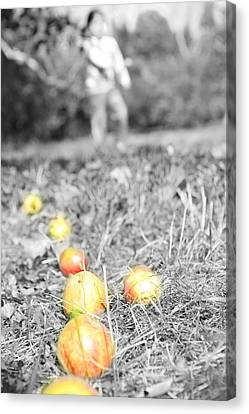 Tossing Apples In The Orchard Canvas Print by Lee Dos Santos