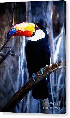 Toucan Postcard Canvas Print - Toucan by Barbara D Richards