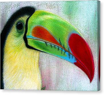 Toucan Canvas Print
