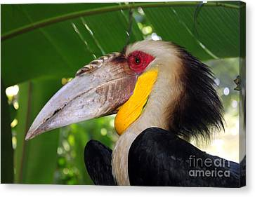 Toucan Canvas Print by Sergey Lukashin