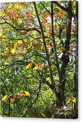 Touch Of Autumn Canvas Print by Ann Horn