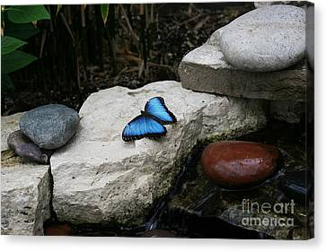 Touch Of Blue Canvas Print by Judy Whitton