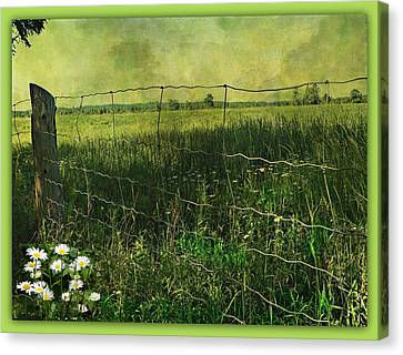 Touch Of Daisies  Canvas Print by Dianne  Lacourciere