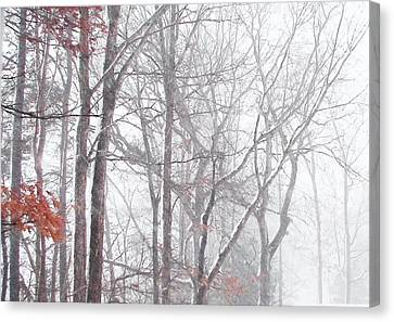 Touch Of Fall In Winter Fog Canvas Print