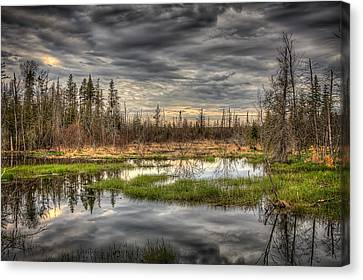 Touch Of Nature Canvas Print by Gary Smith