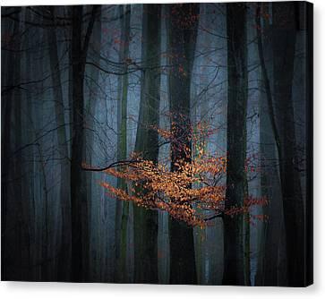 Winter Light Canvas Print - Touch Of Winter Sun by Marek Boguszak